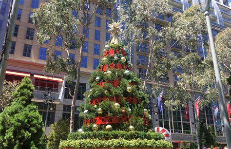 best 28 christmas tree sales melbourne christmas