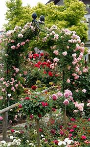 Stocksee Park Und Garden 2017 : viktorianischer rosenbogen kiftsgate classic garden ~ Lizthompson.info Haus und Dekorationen