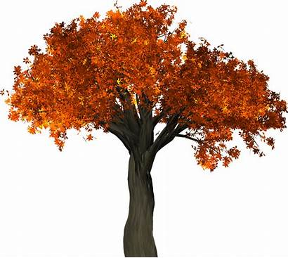 Tree Leaves Autumn Fall Branches Isolated Branch