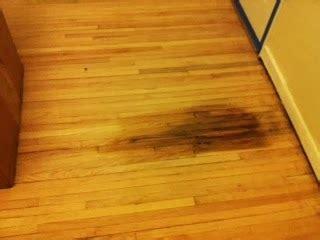 hardwood floors hurt renov8or repairing pet damage to hardwood floors