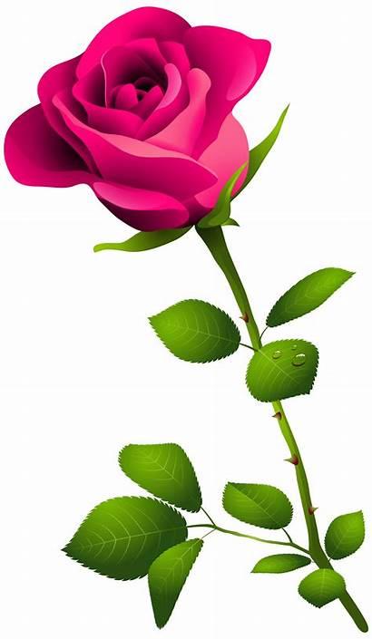 Rose Clipart Plant Clip Clipartmag