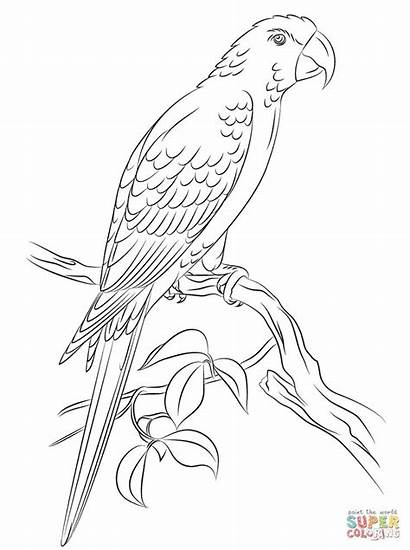 Jamaican Coloring Macaw