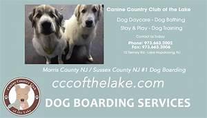 Dog boarding near me dog boarding near nj dog boarding nj for Dog boarding near me