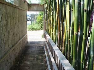 Bambus Vernichten Tipps : sichtschutzzaun aus schnellwachsenden pflanzen tipps f r bambus im garten g rten pinterest ~ Whattoseeinmadrid.com Haus und Dekorationen