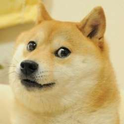 What Breed Is Doge Meme - understand the quot doge quot meme in 7 short steps the barkpost