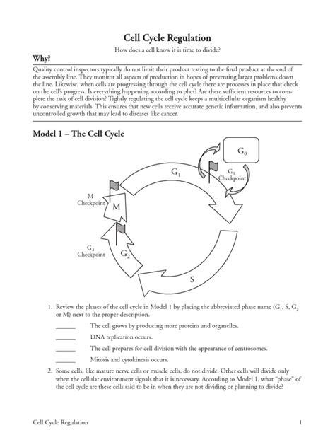 Worksheet Cell Cycle Regulation Worksheet Grass Fedjp Worksheet Study Site
