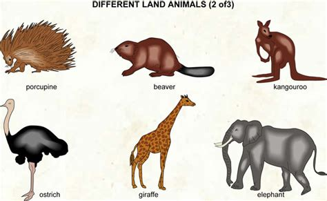 English resources for primary students: Animals
