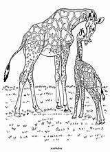 Coloring Wild Animals Pages Animal sketch template