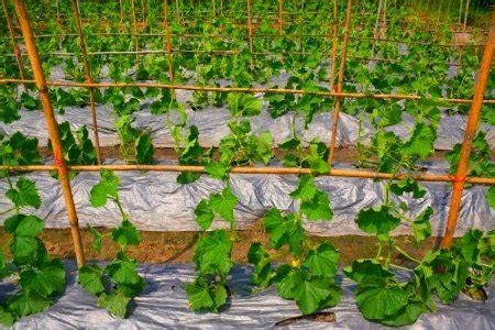 best mulch for vegetable garden beds the best mulch for a vegetable garden doityourself com