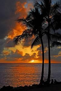 Tropical Nights Print by Lynn Bauer   Tropical, Kauai ...