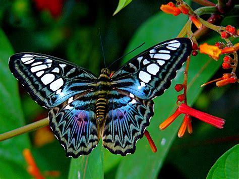 Top 10 Beautiful Butterflies