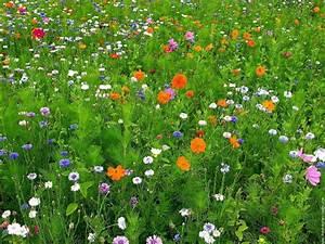 Comment preserver la biodiversite pres de chez vous la for Ou acheter le tapis champ de fleurs