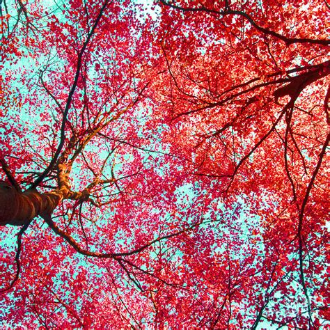 abstract red blue nature photography photograph  artecco