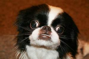 Cross Eyed Dog | Flickr - Photo Sharing!