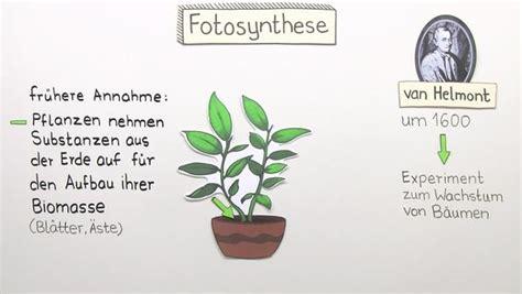 Algen Vorhang Wandelt Co2 In Sauerstoff Um by Fotosynthese Und Atmung Biologie Lernen
