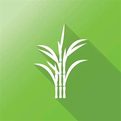 Sugar Cane Vector Clip Vectors Illustrations Icon