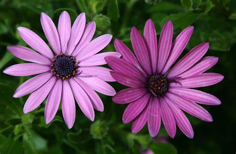 foto fiori bellissimi bellissimi fiori foto immagini piante