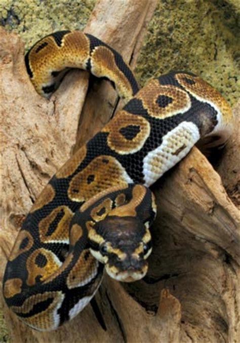 rangers range python