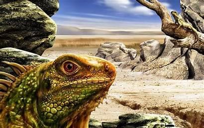 Iguana Wallpapers Lizard Psd Animal Layered Lizards
