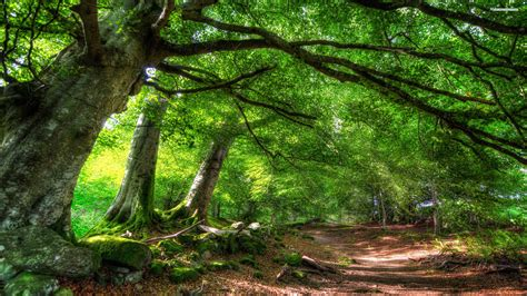 Green Forest Image by Green Forest Picture Hd Picture Of A Widescreen