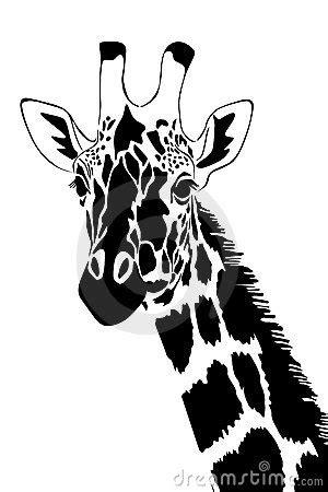 Giraffe In Schwarzweiss Stockfoto - Bild: 18057960