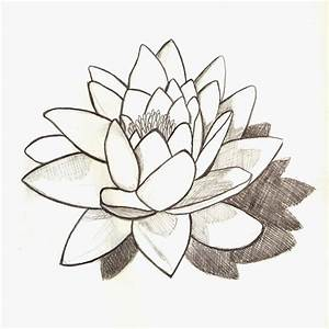 Best Photos of Lily Pad Drawings In Pencil - Water Lily ...