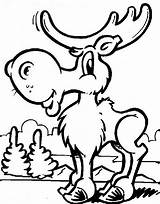 Coloring Pages Moose Printable sketch template