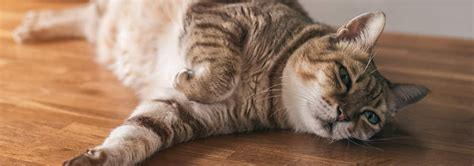 Is Your Cat A Senior Common Signs To Know Hills Pet