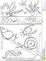 Pond Coloring Pages Printable Template Sketch sketch template
