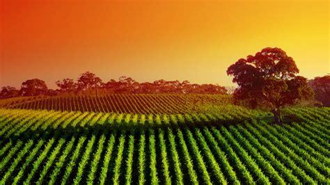 vineyard sunset widescreen wallpaper wide screen