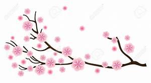Drawn cherry blossom single - Pencil and in color drawn ...
