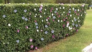 10 haies de jardin pour vous separer de votre voisin With tapis champ de fleurs avec canapé convertible style industriel