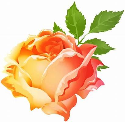 Yellow Rose Orange Clip Clipart Roses Transparent