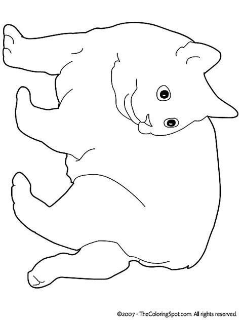 Hondenhoofd Kleurplaat by Kleurplaat Kleurplaat Poezen 3792 Kleurplaten
