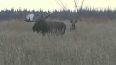 Alaskan Yukon Moose Hunt Doovi