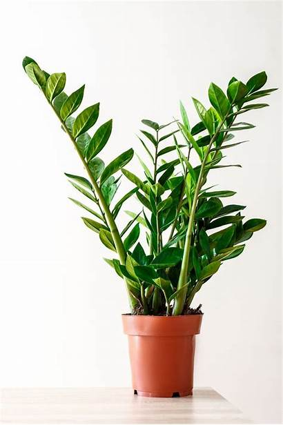 Plants Easy Houseplants Care Leaves Potted Plant