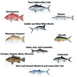 Louisiana Saltwater Fish Species
