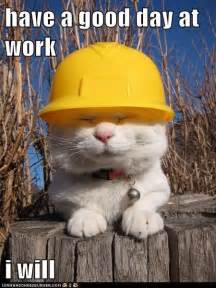 safety cat a great day at work i humor