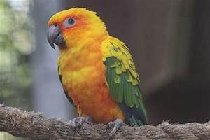 Banham Zoo Animal Conservation Zoological Society Of