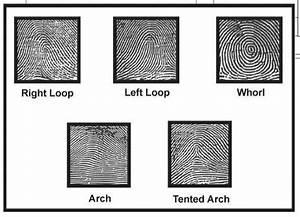 Matching Fingerprints Worksheet