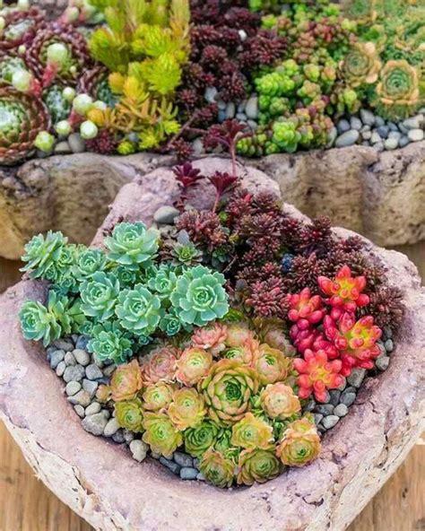 Composition Plantes Grasses Exterieur Plantes Grasses Ext 233 Rieur Conseils Et Id 233 Es Pour Insuffler Une Touche Artistique Au Jardin
