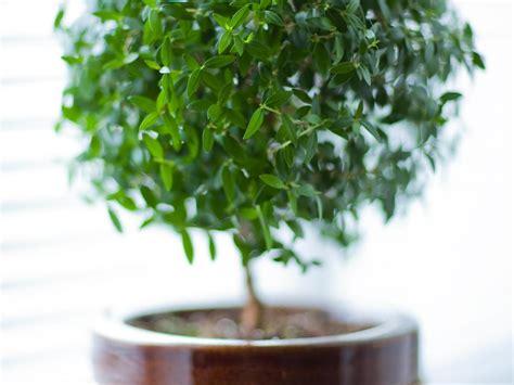 quelle plante pour une chambre mettre une plante dans sa chambre bonne ou mauvaise idée