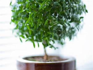 mettre une plante dans sa chambre bonne ou mauvaise idee With plante verte chambre a coucher