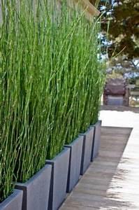Bambus Auf Balkon : bambus als sichtschutz im garten oder auf dem balkon desert landscaping ~ Eleganceandgraceweddings.com Haus und Dekorationen