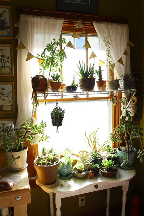 House Plants For Window by This Is Exactly What A Plant Addiction Looks Like And