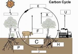 33 Carbon Cycle Diagram Label