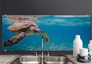 Alu Dibond Panorama : splashback alu dibond traveling turtle panorama ~ Sanjose-hotels-ca.com Haus und Dekorationen