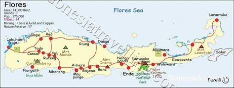 flores island  tribes map  tours indonesia
