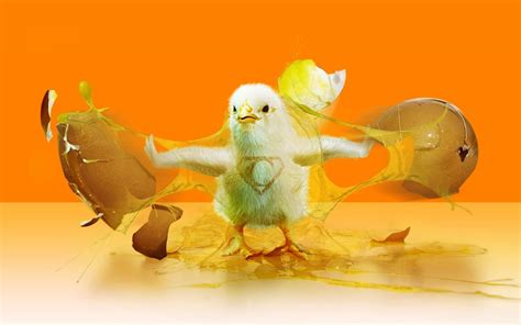 3d home interior design chicken come out from egg hd wallpapernew hd