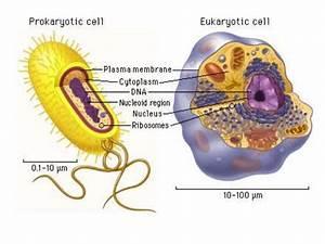 Prokaryotic And Eukaryotic Cell